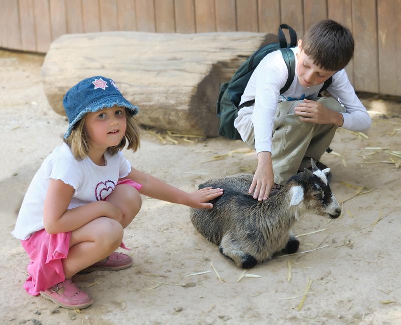 Мои дети очень любят животных.