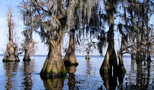 Best Lakeside Parks in Clermont Florida